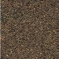 Закупаем посевной материал Фацелия, Люцерна, Конюшина и другие кормовые травы