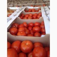 Реализуем помидоры в хорошем качестве а также есть в наличии огурцы