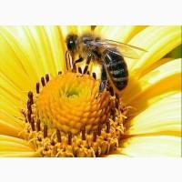 Продам мед разнотравье 2019г