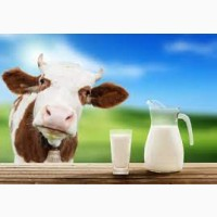 Оптовая продажа молока