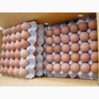 Оптовая продажа реализация яйцо куриное