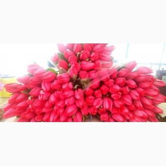 Продам тюльпан к 8 марту разных цветов