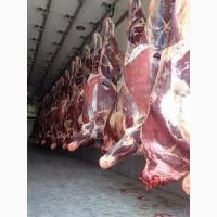 Frozen Beef meat FOB Odessa