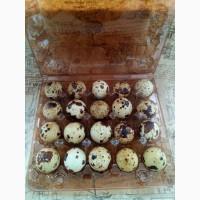 Перепелині яйця інкубаційні, харчові