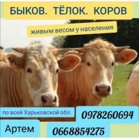 Куплю КРС (Быков, Тёлок И Коров)