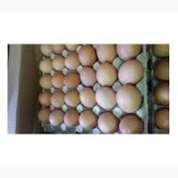 Оптовая продажа реализация доставка куриное яйцо