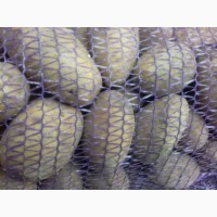Продам Картофель чистый оптом цена 7 грн