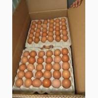 Яйцо куриное оптовый продажа осуществляем доставку