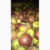 Продам яблоко оптом сорт Спартан