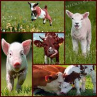 Витаминный комплекс для животных