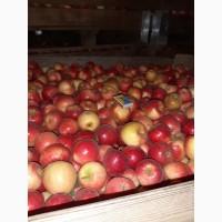 Продам яблоко Релинда оптом