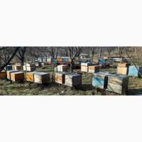 Продам бджол