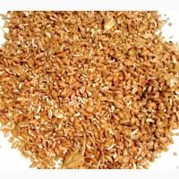 Пшеница цельная, дробленая пшеница. Корм с/х животным и птицам
