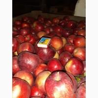 Продам яблоко Джонагоред оптом