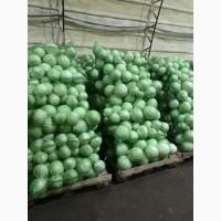 Продам капусту без болезни