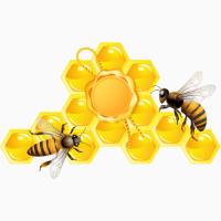 Продам бджолопакети (750), бджолосім#039;ї (договірна)