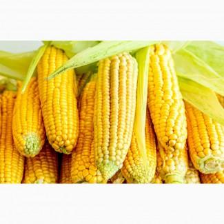 Закупимо кукурудзу (база)