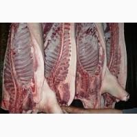 Реализуем полутуши свиные наилучшего качества