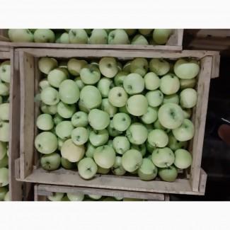 Продам яблоко оптом, сорт Папировка, Белый налив