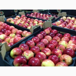 Скупка яблук. Продати яблука