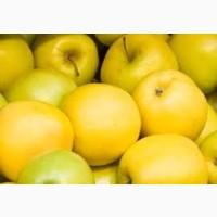 Продам яблука, сорт Голден