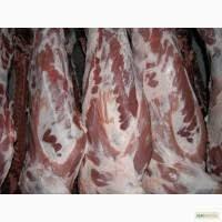 Полутуши свиные оптовая продажа реализация доставка