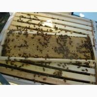 Пчеломатки Карпатской породы Вучковского Типа 2019 г
