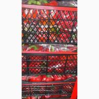 Перец кубический красный, сорт Калифорния - импорт из Турции - крупный опт более 22 тн