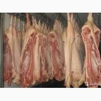 Реализуем полутуши свиные