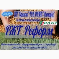 Озима пшениця РЖТ Реформ