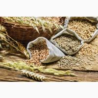 Куплю зернові дорого