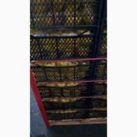 Перец Кубический желтый, сорт Каруа - импорт из Турции - крупный опт более 22 тн