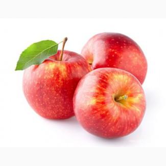 Куплю яблоки. Продать яблоки опт