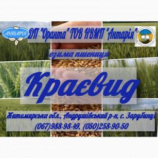 Озима пшениця Краєвид