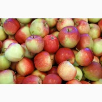 Пролам оптом яблука 2 сорту