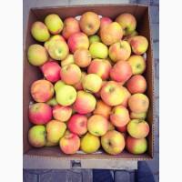 Продам яблука 1 сорту з власного саду до 80т