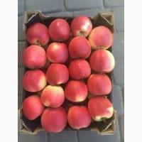 Продам оптом яблука під сік