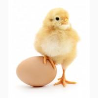 Реалізуємо яйцо кобб 500