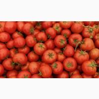 Продам помидор в наличии большой объём