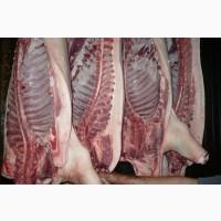 Мясо свинины Одесса заказ