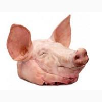 Продам свиные головы - охлажденная свинина и субпродукты оптом