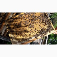 Продам бджолопакети, пчелопакеты