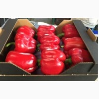 Красный болгарский перец минимальный заказ - от 20 т