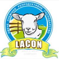 Продам племіниих овець французької молочної породи ЛАКОН (lacaune)
