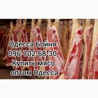 Домашняя свинина цена
