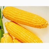 Закупаем кукурузу в Украине