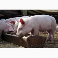 Закупка отходов пищевой промышленности