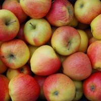 Продам яблоко Пинова/Голден
