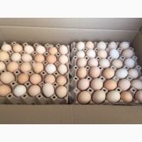 Продам яйцо бройлера от поставщика. Яйцо находиться в Чехии. С 500 штук