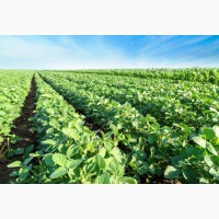 Приводим клиентов для Агробизнеса. Поможем продать СОЮ